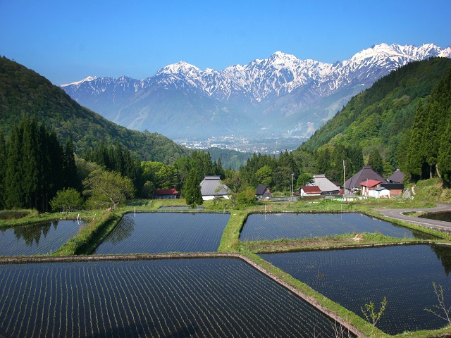 Aoni Rice Terraces