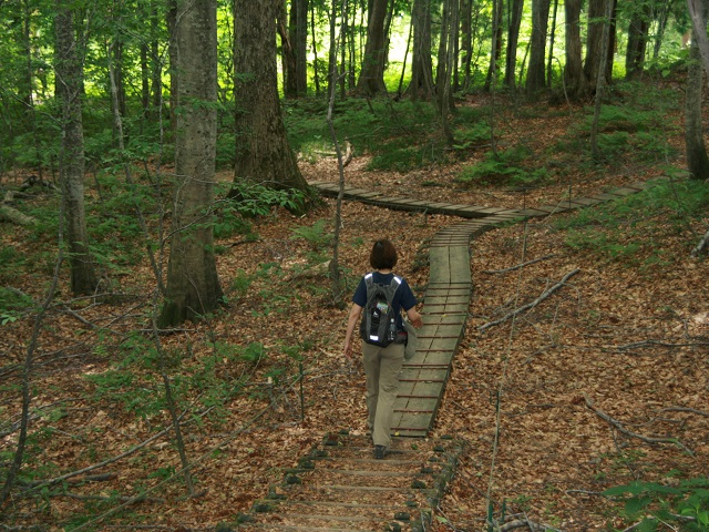 Forest trail of Shiragami