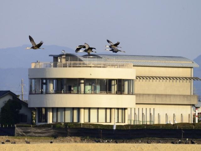 Crane Observation Center
