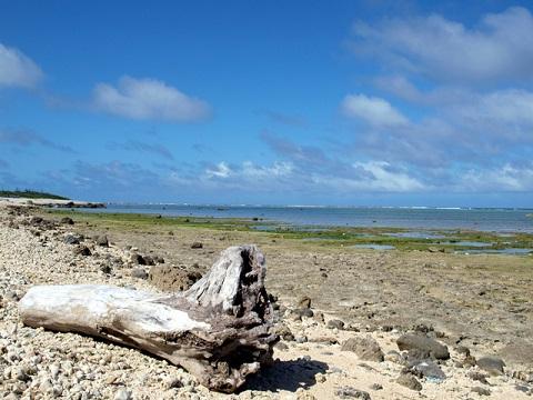 白保海岸流木