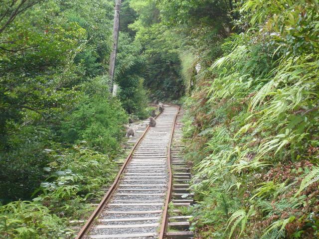 登山道と猿