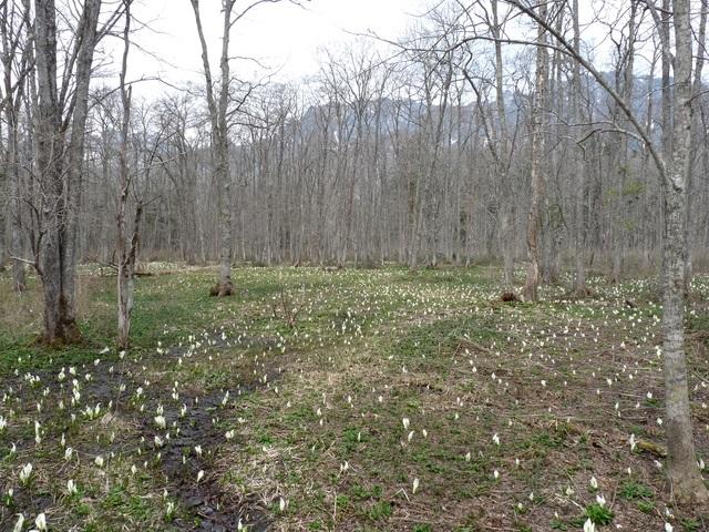 Togakushi Forest Botanical Park