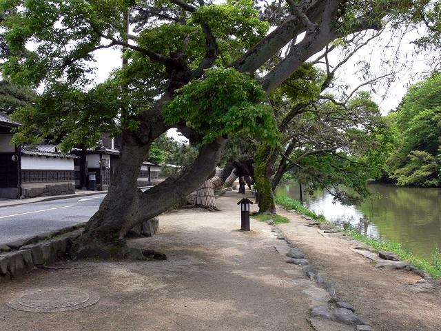 Shiominawate