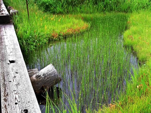 Midagahara Marsh