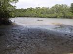 Miyara River Mangrove